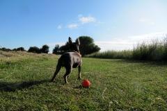 Hundewiese5