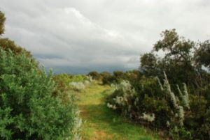 Sardinien2009_1