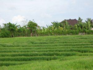 Thailand2009_37